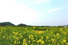 🇨🇳良渚文化村-中国5000年的文化荣耀和安居乐业在这里