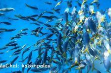 蜜月海岛游|遇到对的人每一天都是幸福!