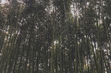 新的一天,我们来参观游览以高达2.4km的竹林路为背景举办的潭阳绿竹节。  游览路上有碰到来春游的中