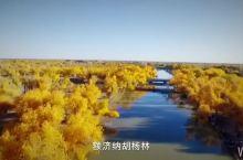 阿拉善盟,最美胡杨林