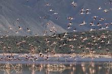 肯尼亚野生动物保护区
