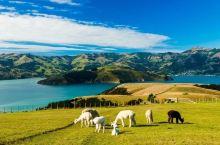 新西兰南岛指南,吃美食看美景