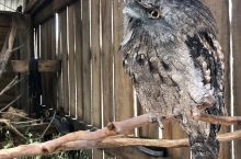 月光之旅野生动物保护园