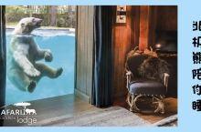 体验   与狮子老虎北极熊亲密共眠,你敢吗?