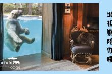 体验 | 与狮子老虎北极熊亲密共眠,你敢吗?