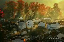又是一年秋到来,婺源石城的枫叶也悄悄的变红了,