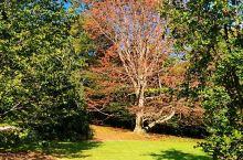 游哈佛大学阿诺德植物园