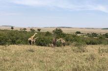 肯尼亚 马赛马拉国家保护区