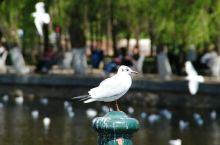 翠湖公园,昆明的城市之玉