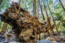 优胜美地的森与林