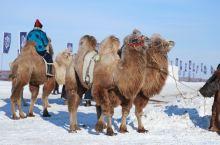 最美冬季雪景,走进冰雪那达慕