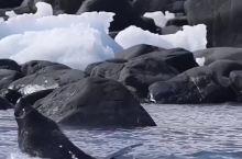 在南极,负责震撼心灵的,是这些冰雪世界的萌宠
