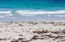 #世界遗产#海豹湾保育公园