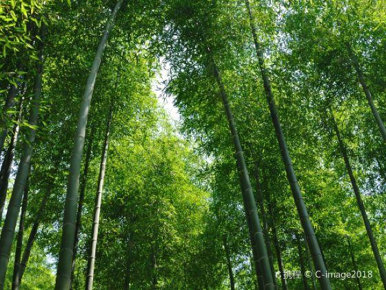 The Great Bamboo Sea of China