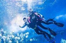 【半价疯抢】重庆汉海海洋公园日场票只要75元,看海洋生物就来汉海!