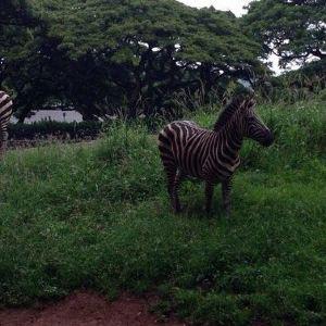 火奴鲁鲁动物园旅游景点攻略图