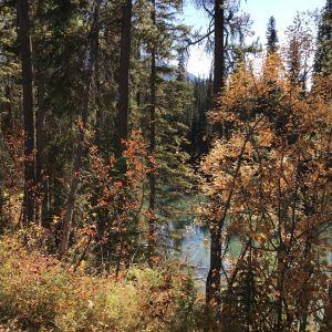 贾斯珀国家公园旅游景点攻略图