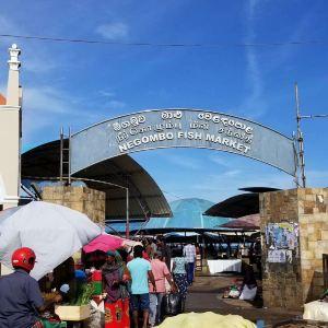 尼甘布中心鱼市场旅游景点攻略图