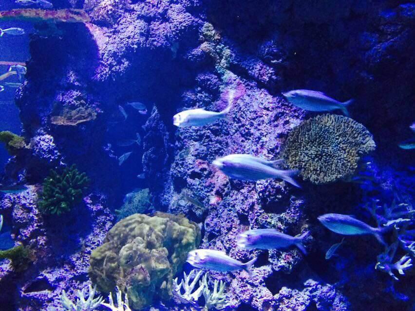 便宜鲨鱼海洋_圣淘沙岛S.E.A.海洋馆好玩吗,圣淘沙岛S.E.A.海洋馆景点怎么样_点评 ...