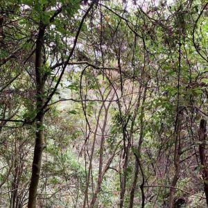 千岛湖森林氧吧旅游景点攻略图