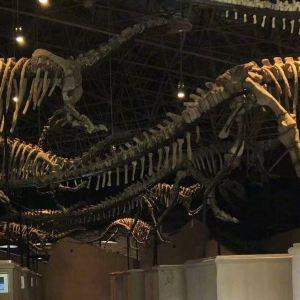 世界恐龙谷旅游区旅游景点攻略图