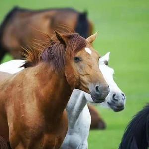 满洲里游记图文-呼伦贝尔大草原,一个让你忘却所有烦扰的心灵牧场!