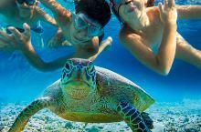 【@-@海龟哥带您看斯米兰@-@】玩转斯米兰群岛一日游