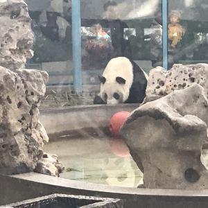 天津动物园旅游景点攻略图