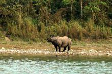在奇达旺国家公园有三件必做的事,一是骑大象看独角犀牛,其次是坐独木舟赏鸟和找鳄鱼,三是在园区四处闲逛