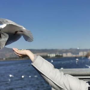 海埂大坝旅游景点攻略图