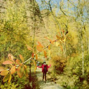 坎布拉国家森林公园旅游景点攻略图