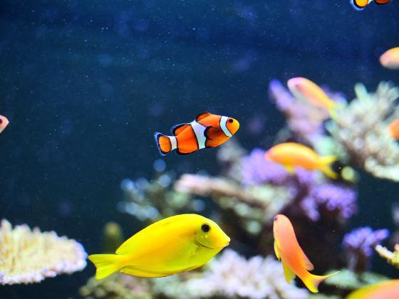 Downtown Aquarium