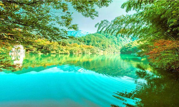Hibiscus Valley