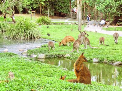 The Wildlife Habitat
