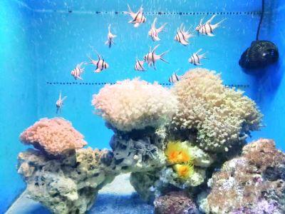 南寧海底世界