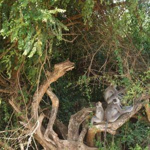 乌达瓦塔凯勒保护区旅游景点攻略图