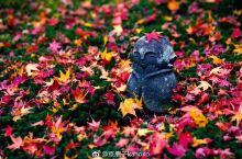 「红叶绝景·圓光寺」
