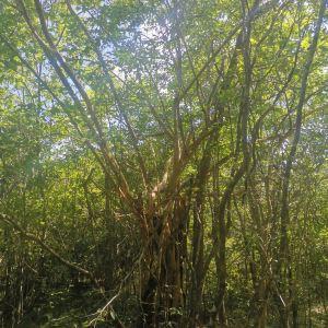 Popham's Arboretum旅游景点攻略图