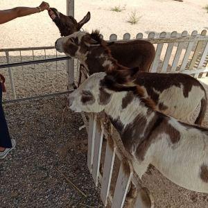 华欣瑞士绵羊牧场旅游景点攻略图