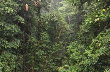 哥斯达黎加之热带雨林行