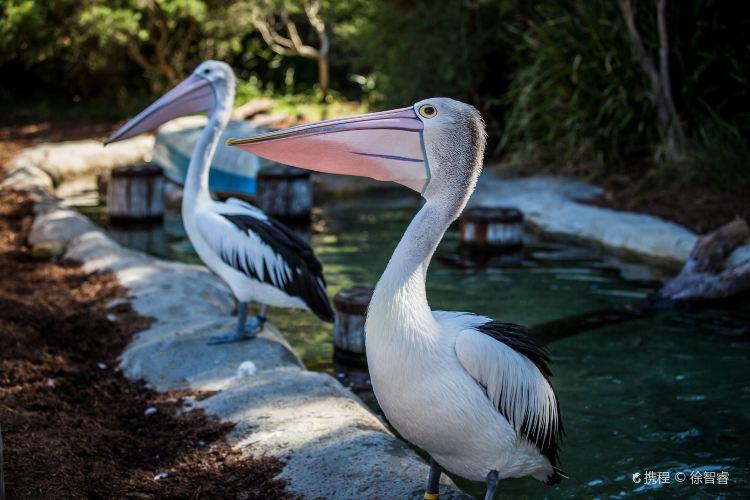 Taronga Zoo4
