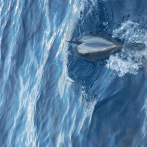 班度士岛日落观海豚体验旅游景点攻略图