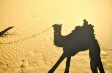 骆驼沙漠之旅