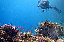 埃及红海潜水 潜水拍摄时自己成为被拍摄者
