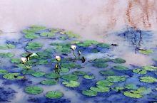雅拉国家公园里,荷塘上,几只水鸟静静的伫立在河面,就像是一副水粉画~