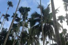 槟榔丛林 槟榔谷