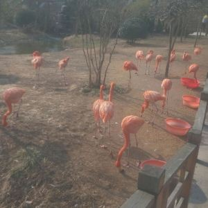 青岛森林野生动物世界旅游景点攻略图
