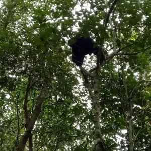 金孔雀之夜·勐巴拉娜西旅游景点攻略图