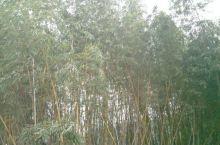 万松山公园半日游~踏青、休闲、运动、健康