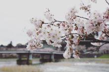 日本赏樱花